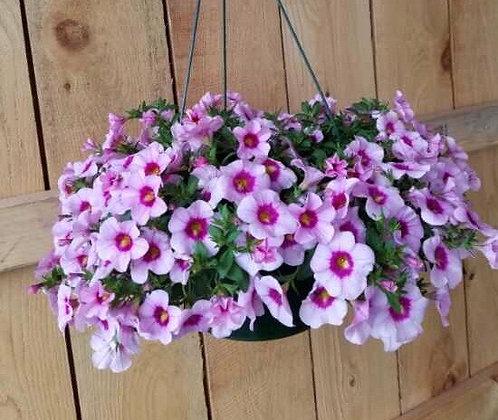 Calibrachoa Hanging Basket