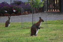 Wildlife on our doorstep