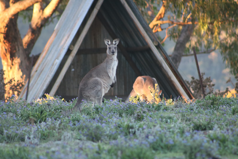Wildlife on the doorstep