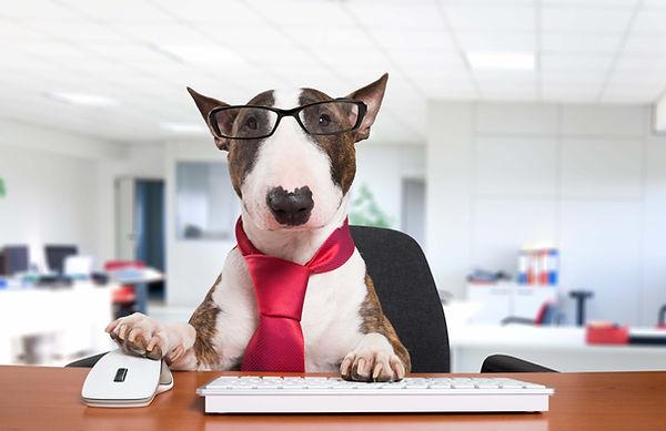 Hund_på_kontoret_medium.jpg