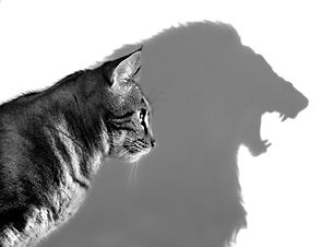 The Lion Within - Profile of a house cat