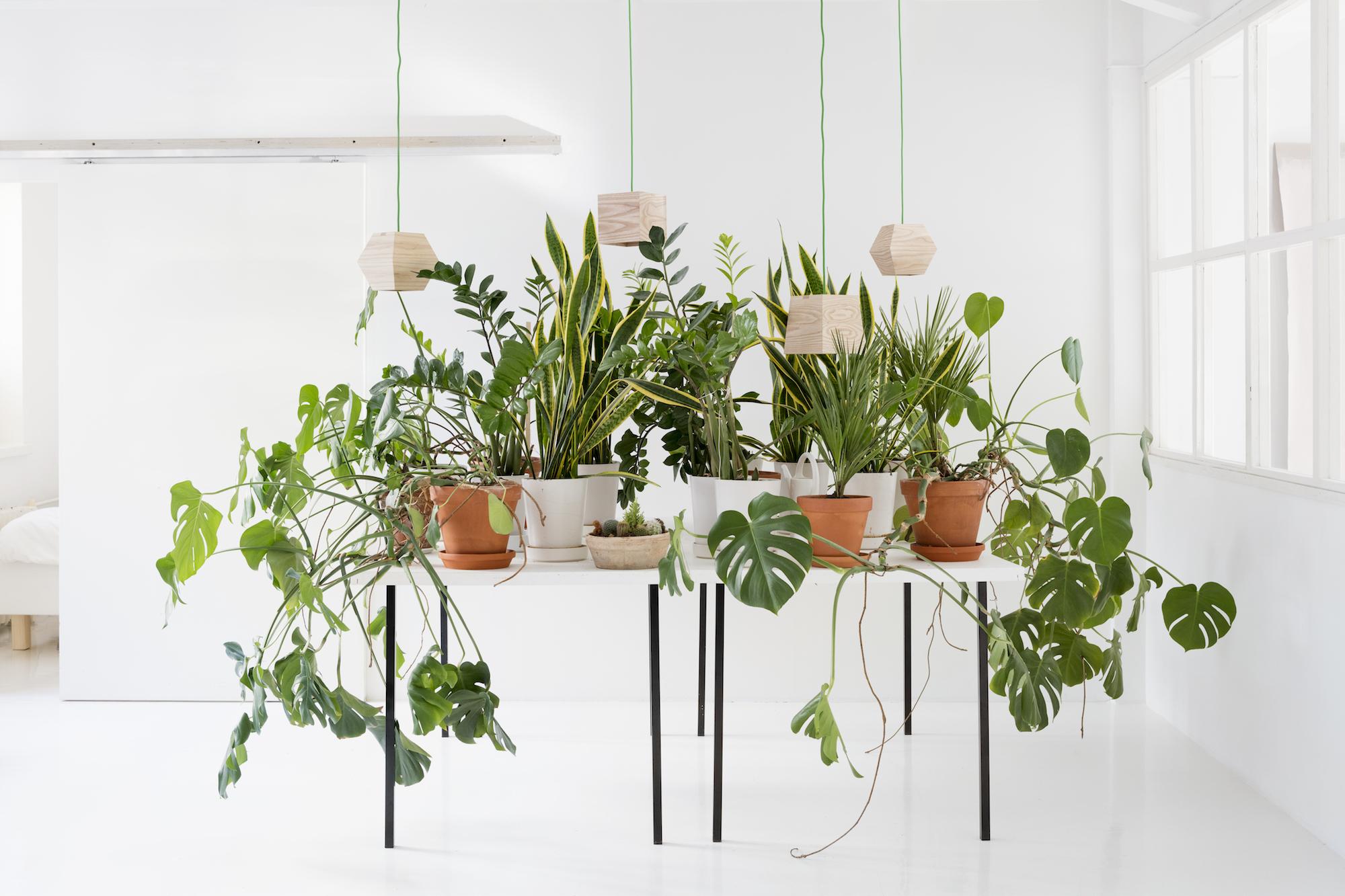 Valo Pendant Lamps