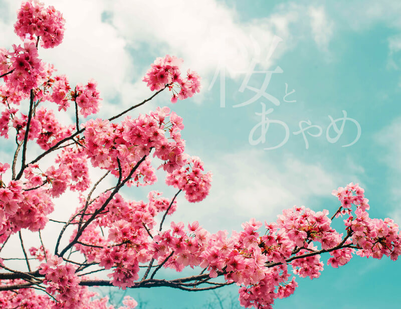 桜とあやめ