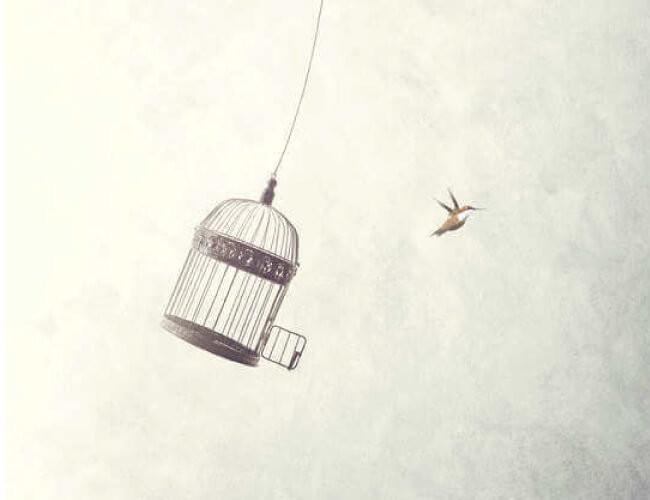 自由になる鳥、開放される鳥