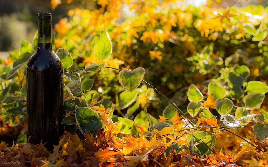Wine-Folly-Harvest-Background-Desktop.jp