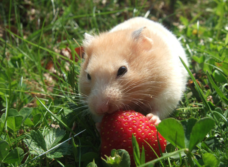 Krise als Chance: Austieg aus dem Hamsterrad!