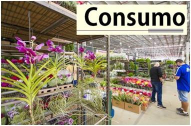 O Consumo de Flores e Plantas