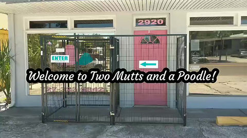 Drop off and Pick up at Two Mutts and a Podle Pet Salon