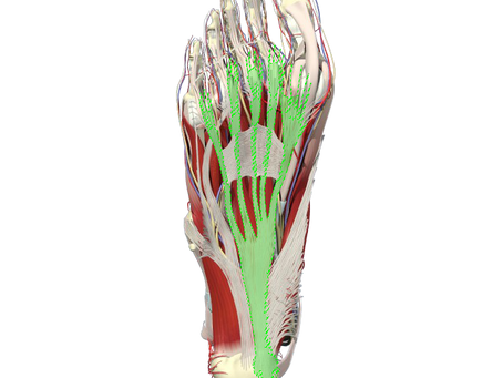 Plantar Fasciitis Anatomy and Why You Need to Know it