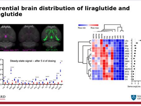 サクセンダとオゼンピックの脳内分布は異なる