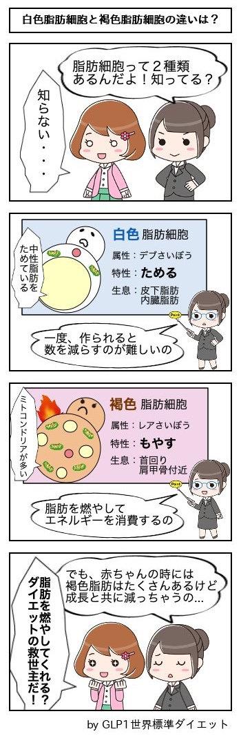52白色脂肪細胞と褐色脂肪細胞の違いは?.jpg