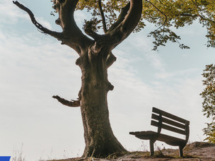 Ağaçların Gizli Yaşamı