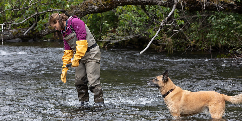 Salmon, Stream Temperatures, and Climate Change on the Deshka