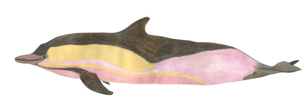 pink yellow dolphin.jpg