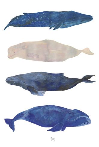 whale_postcard.jpg