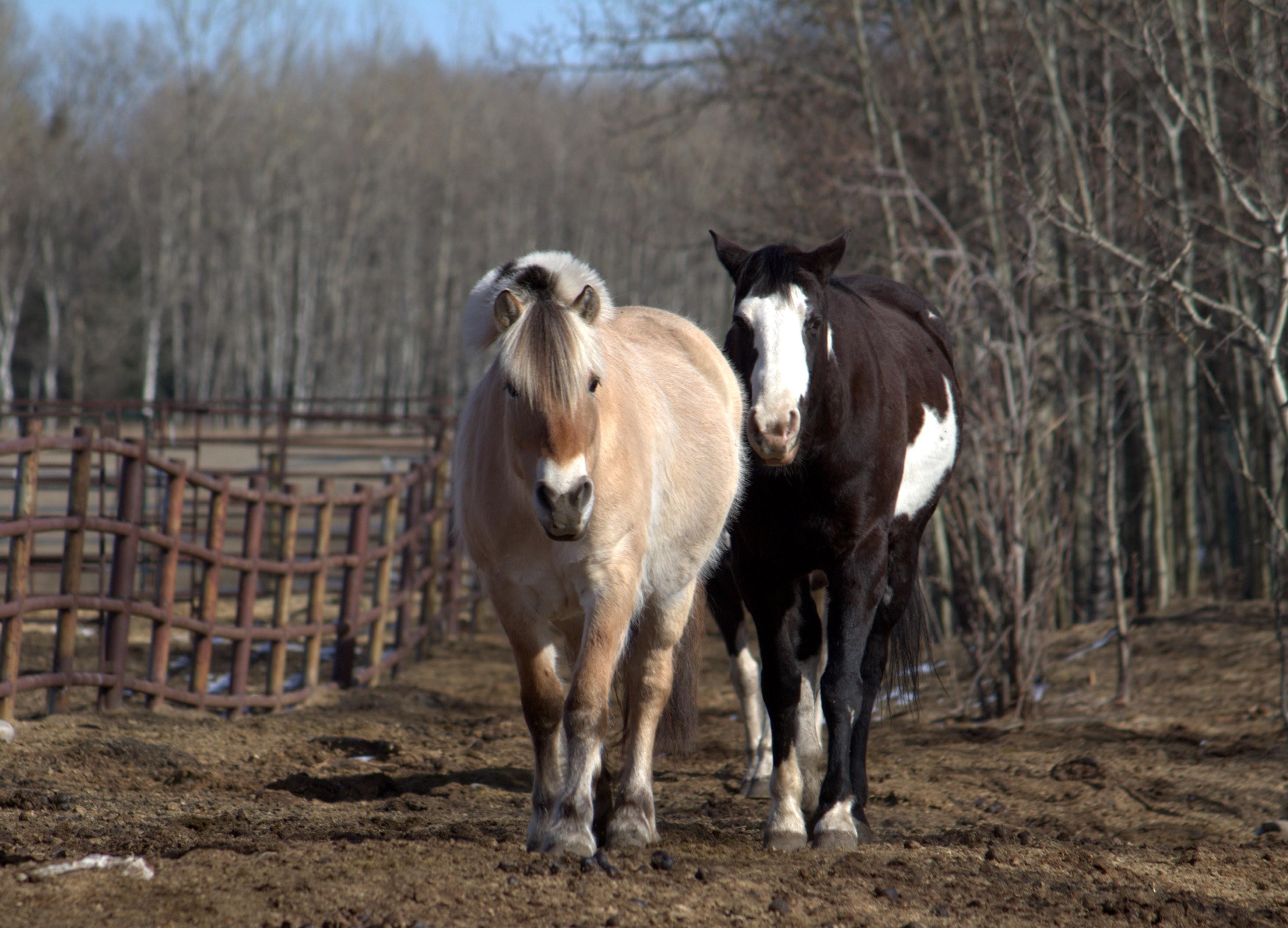 Therapeutic Riding | Calgary | 4:13