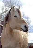 Therapeutic Horse | Calgary | 4:13 Therapeutic Riding Association