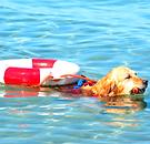 chien sauveteur plage emmenetonchien vac