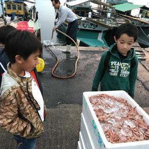 魚市場ツアー