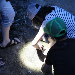 昼の海岸生き物観察&夜の海岸生き物観察の募集を開始します。