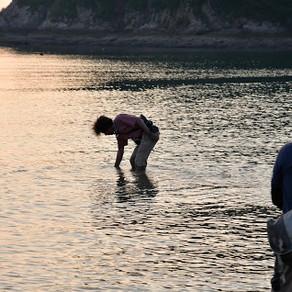 (再募集)8月9日(日) 夜の生き物観察会@鴨池海岸