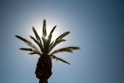 Palmtree backlight