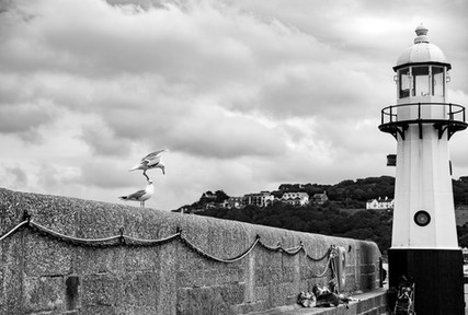 Seagull meeting at the lighthouse