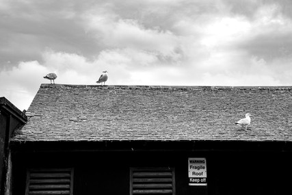 Seagull meeting on the forbidden roof