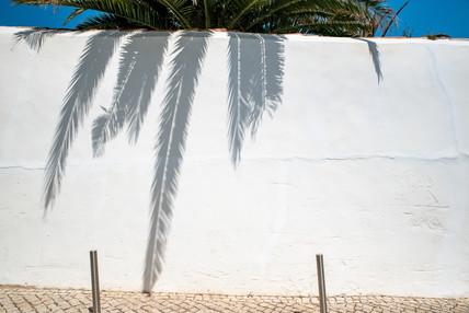 Palmtree shadowplay