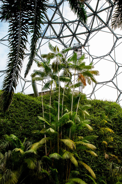 Greenhouse plants - The Eden project