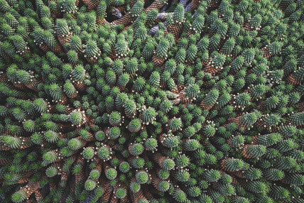 Cactus family from above