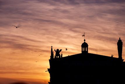 Flying birds at sunset - Venice