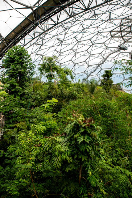 Botanical greenhouse - The Eden project