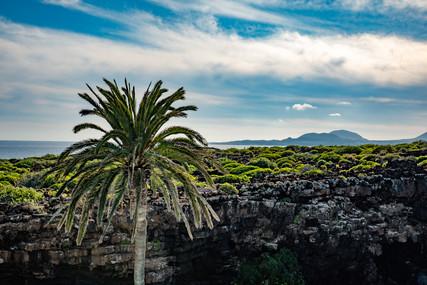 Palmtree landscape Lanzarote