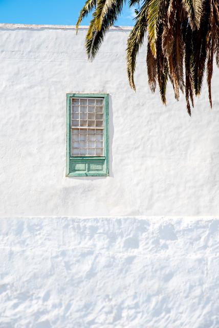 Green palmtree holiday window