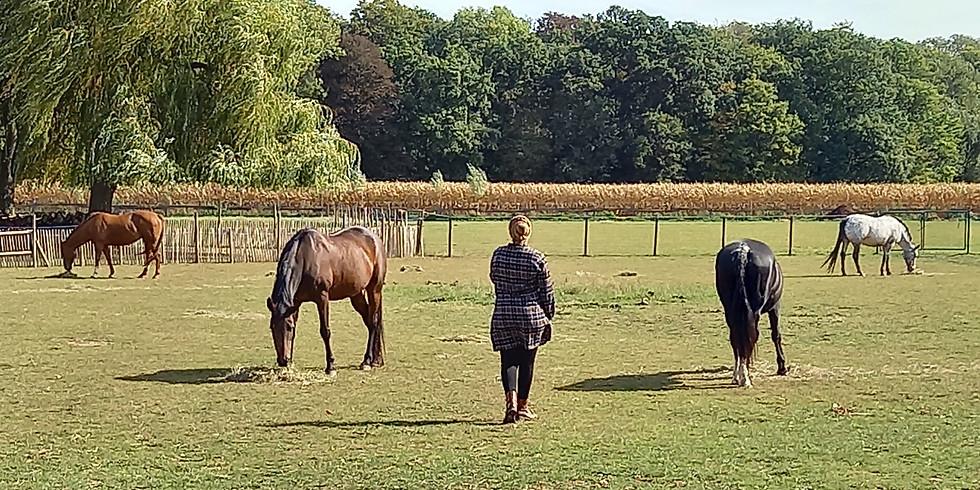 Paardenworkshops - kennismaking