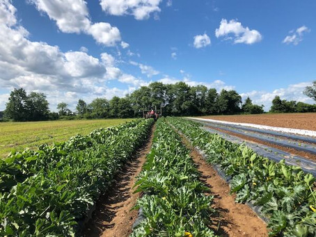 How Climate Change Impacts Agriculture and Farming