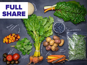 Full Share CSA box example showing the variety of organic produce included in this share size.