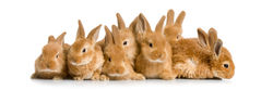 http://www.petandgarden.com.au/Content/Images/rabbits