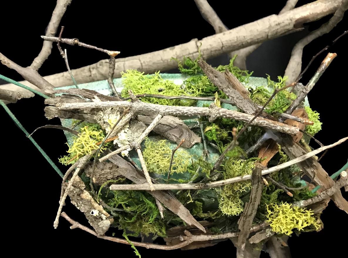 Green Mask Twig moss Bark