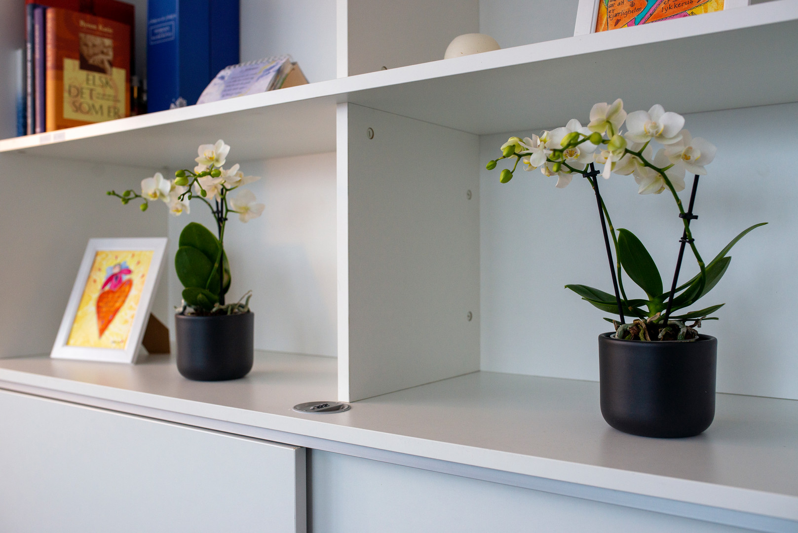 Detaljbilde orkideer i reol.jpg