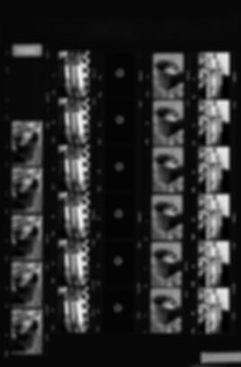 LV14.jpg