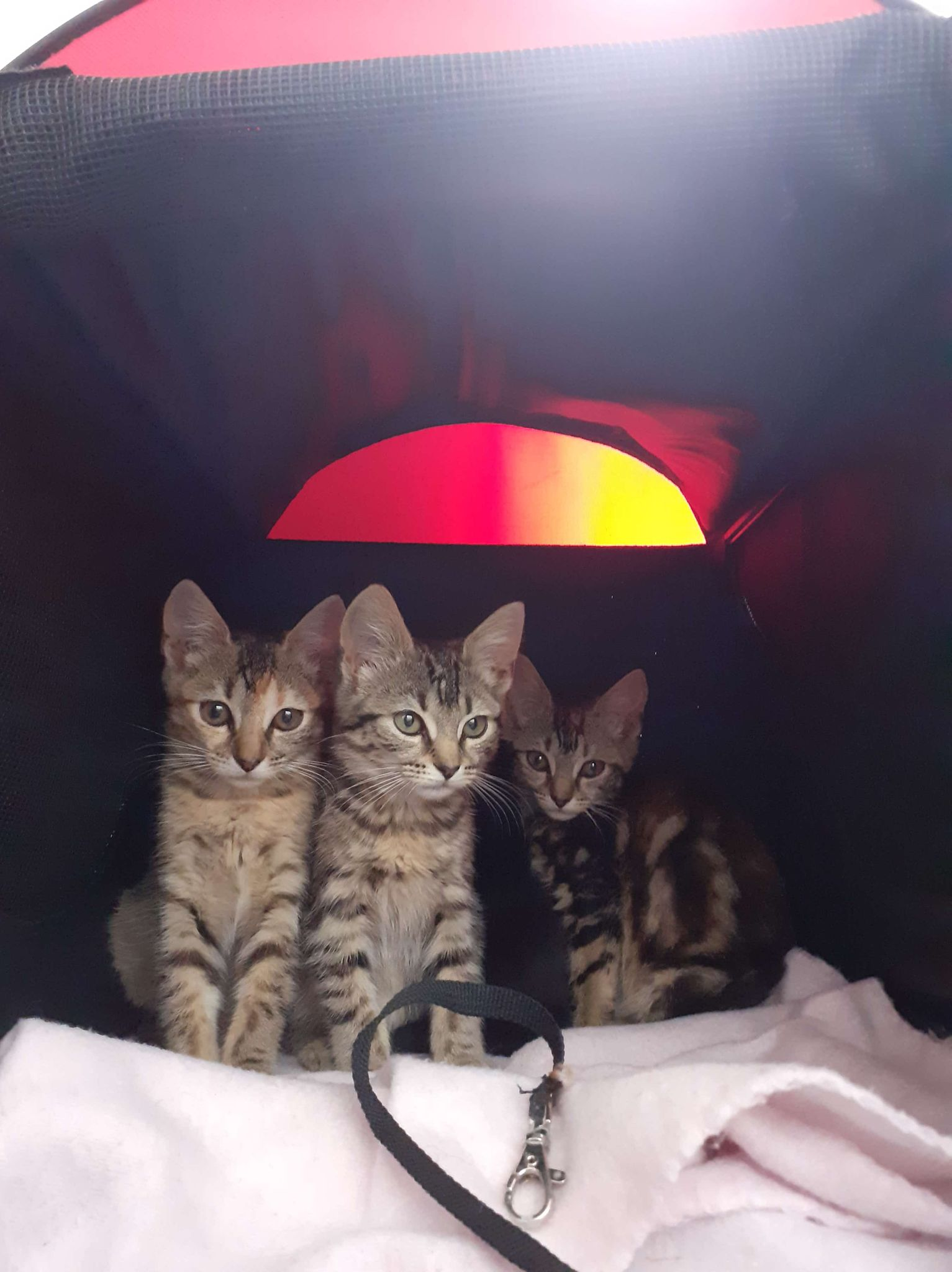 Cleo and sisters