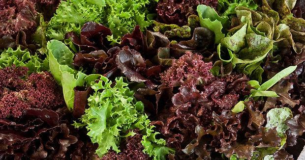 Mixed-Lettuce.jpg