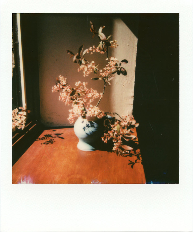 Lola - purple plum blossom.JPEG