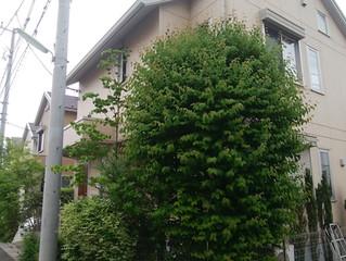 お庭のお手入れ|川崎市の植木屋つくだ
