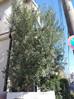 川崎市の植木屋