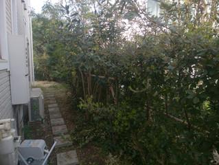 都内でお庭のお手入れ|川崎の植木屋