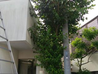 植木の剪定:川崎市高津区の植木屋つくだ