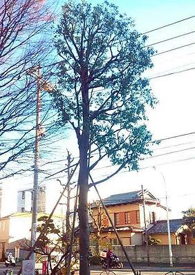 川崎の植木屋